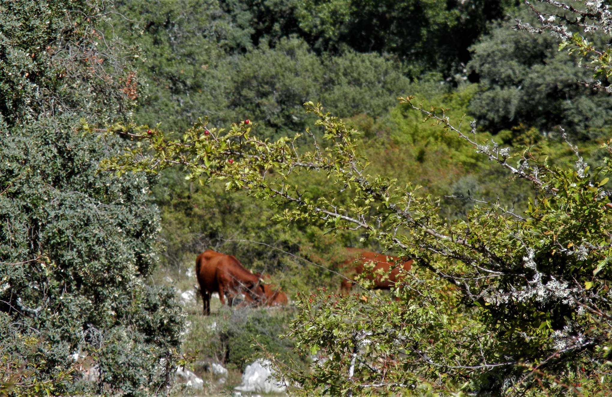 Španělsko, Sierra de Grazalema
